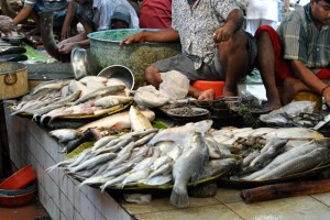 Varieties of fishes in Kolkata fish market