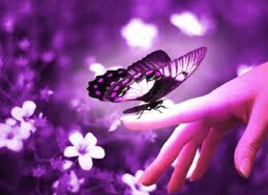 The pretty little butterfly! :)