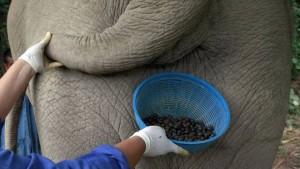 elephant_coffee
