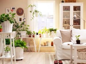 room-plants