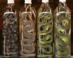 snakewine_3d234b6299