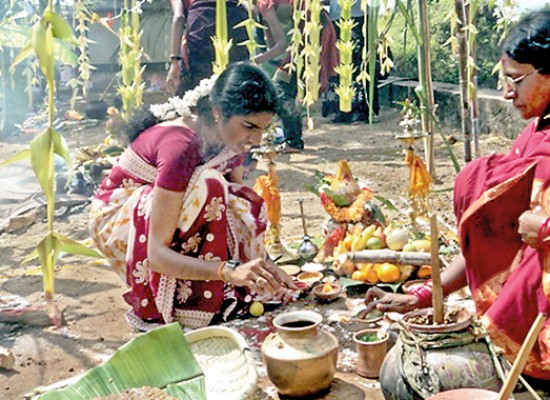 Pongal – The Harvest Festival