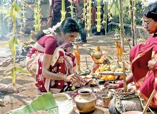 Pongal – The Harvest Festival