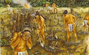 mayanfarmers