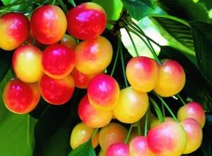 raineir cherry