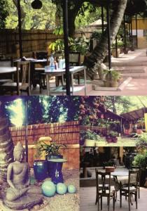 rogue elephant cafe 2 amalgamation