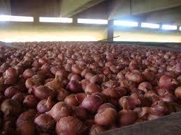 onionstor